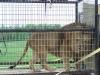 fun_day-lion-2-web